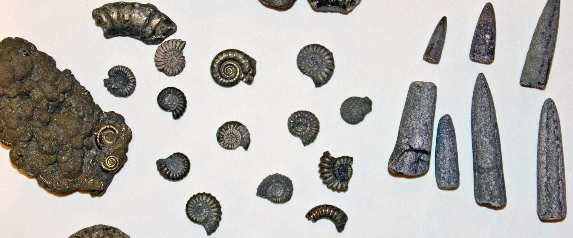 Fossils found on Charmouth Beach