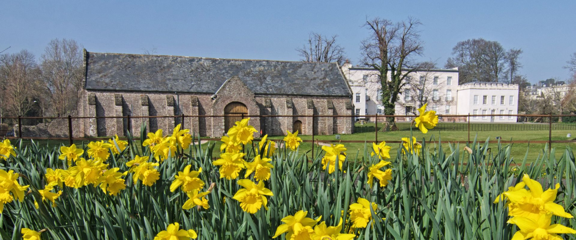 Daffodils in front of the Spanish Barn at Torre Abbey in Torquay