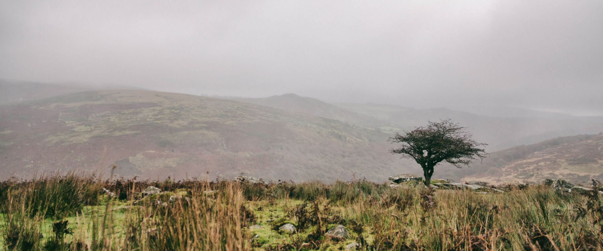 A lone tree near Combestone Tor on a bleak Dartmoor day