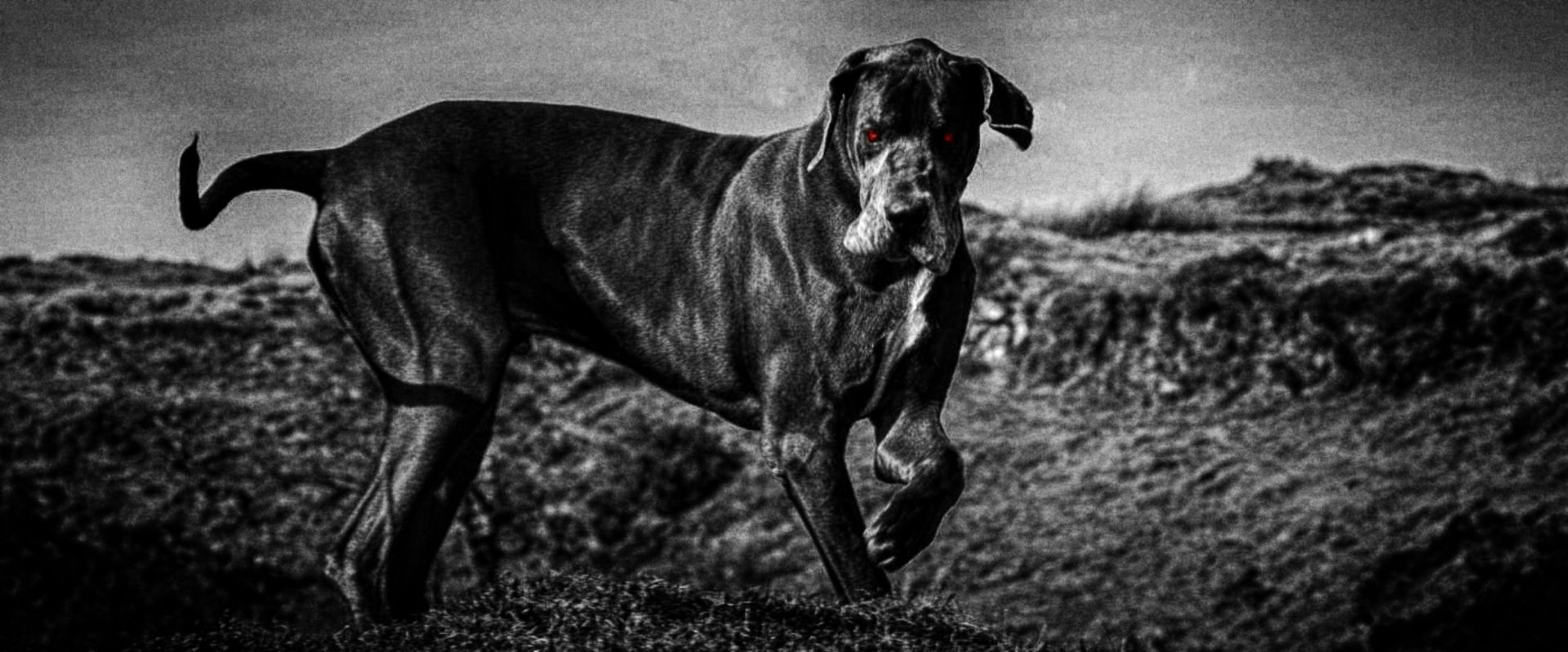 The Hound of the Baskervilles on Dartmoor