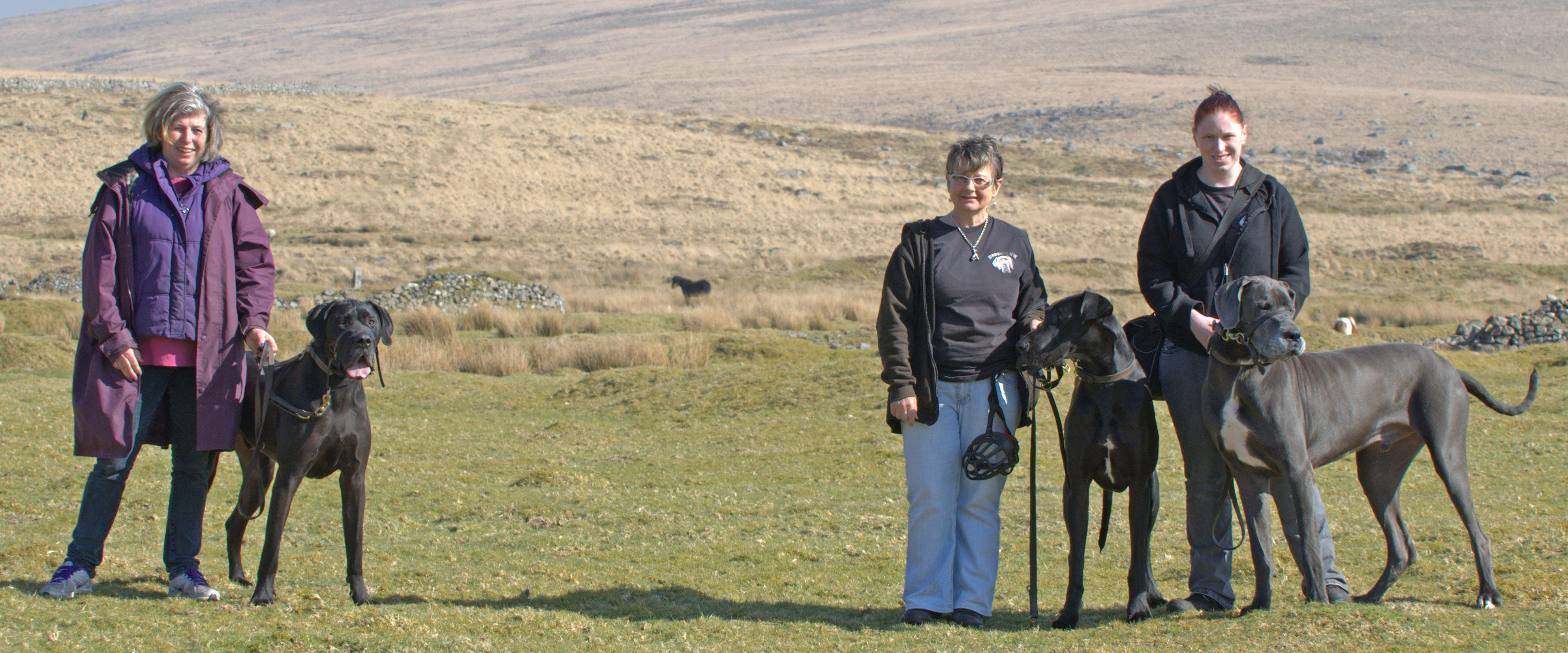 Great Danes on Dartmoor on the Hound of the Baskervilles photoshoot