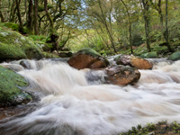 River Dart, Dartmoor