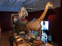 Inside Exeter Museum Devon attraction