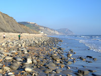 Fossil hunting at Charmouth beach - a Devon attraction.