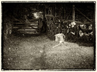 Ghost tours Jay's Grave