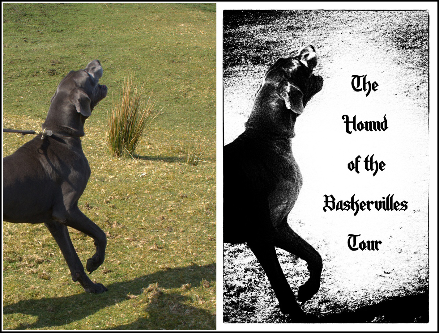 the hounds of the baskerville The hound of the baskervilles adapted from the novel by sir arthur conan doyle the baskerville case happens a few years prior to holme's.