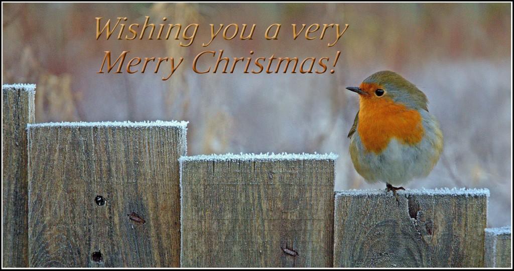 Merry Christmas Robin!