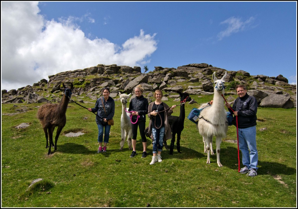 Llamas-Dartmoor-Cream-Tea