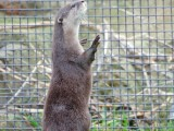 Otter Experience