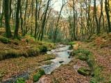 A Dartmoor Stream