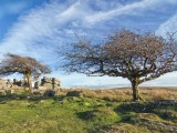 Trees at Combestone Tor