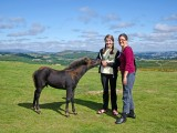 Guests at Haytor with Dartmoor Pony