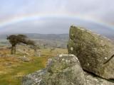 A Rainbow near Combestone Tor