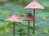 Trio of Mushrooms